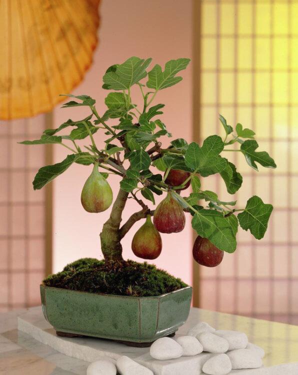 Trang trí sân vườn nhà đẹp chiếm hữu cây bonsai mini