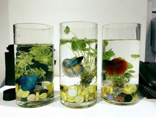 Bể cá mini đơn giản dành cho bàn làm việc nhỏ, không quá cầu kỳ nhưng vẫn đem lại sự vui vẻ, mát mẻ cho không gian làm việc.