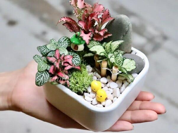 Cmờ ám loại cây trang trí trồng trong nhà mà bạn phải biết