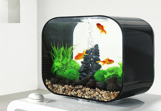 Bể cá mini Desktop với thiết kế giống như một chiếc màn hình máy tính là sự lựa chọn thích hợp cho những gia chủ yêu thích sự mới mẻ.