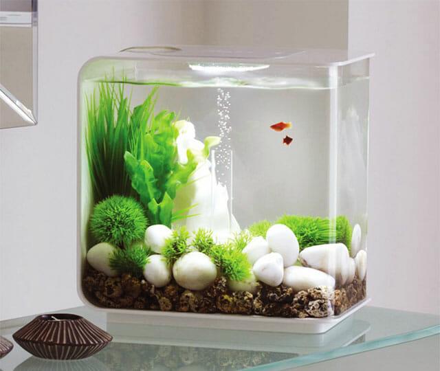 Bể cá mini đúc thủy sinh với sự chuyển động nhẹ nhàng của cây thủy sinh được trồng bên trong mang lại không gian xanh, tạo sự thoải mái cho không gian làm việc.