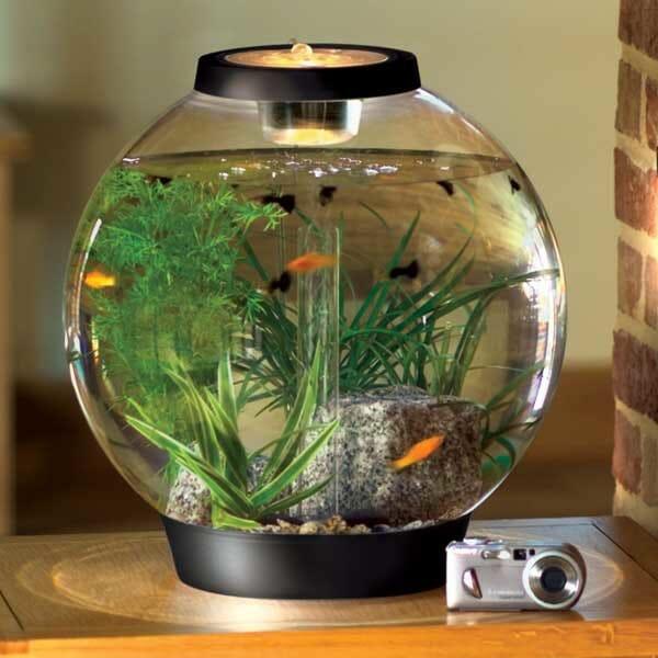 Bể cá mini có đèn LED giúp tạo ánh sáng cho không gian và mang lại sự phản xạ chuyển động của đàn cá trên mặt bàn trông rất bắt mắt.
