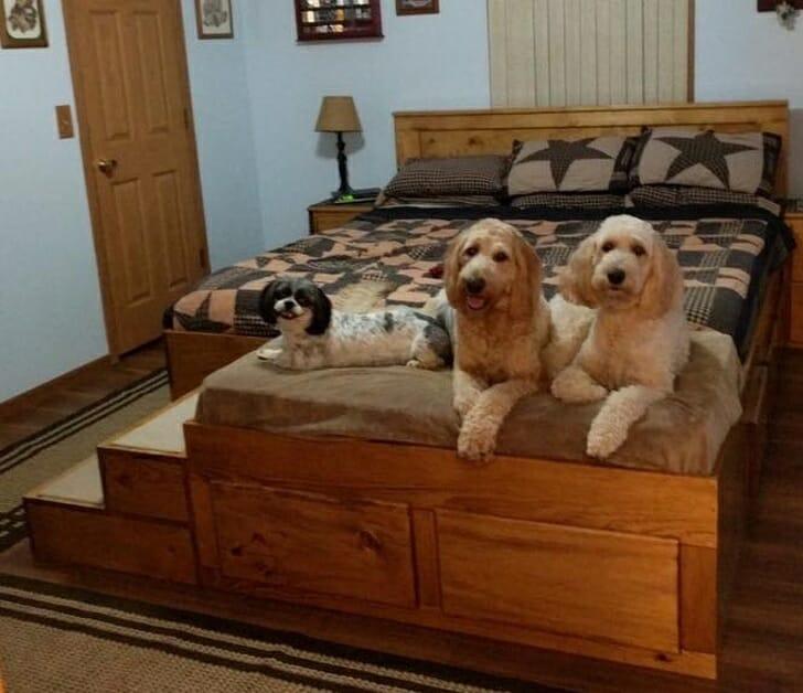 hình ảnh cận cảnh 3 chú chó đang sử dụng giường tiện ích trong phòng ngủ của chủ