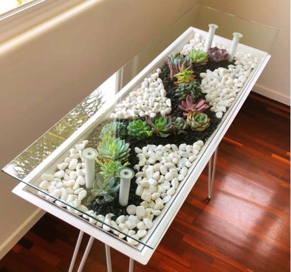 hình ảnh cận cảnh vườn sen đá trong bàn trà kính